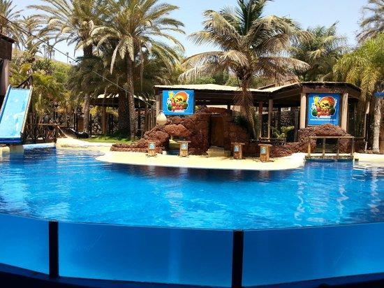 Camel Safari 1 - Picture of Oasis Park Fuerteventura, Fuerteventura - TripAdv...