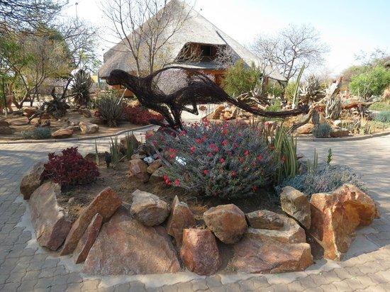 Cheetah Conservation Fund: Courtyard