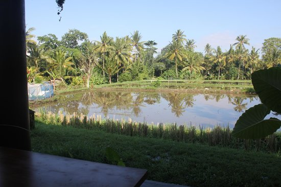 Villa Kunang Kunang : View from the porch