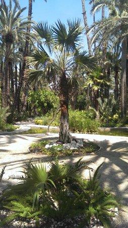 Foto de Jardín Artístico Nacional Huerto Del Cura, Elche: Fuente y La Dama de...