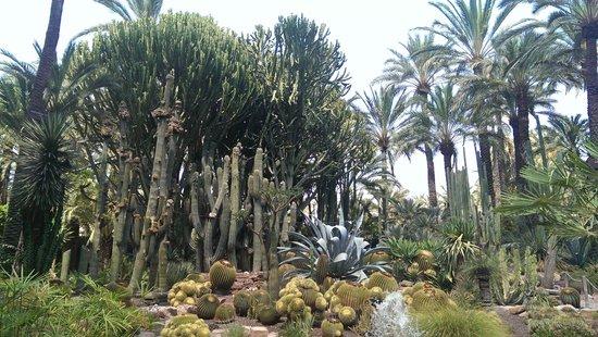 Palmera Imperial: fotografía de Jardín Artístico Nacional Huerto Del Cura, El...