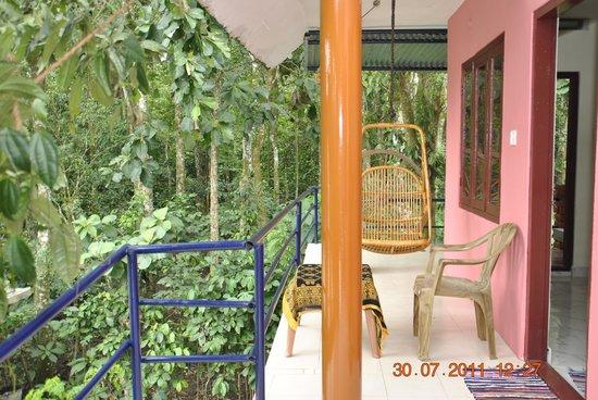 Jungle Paradiso: Coffee plant on the balcony