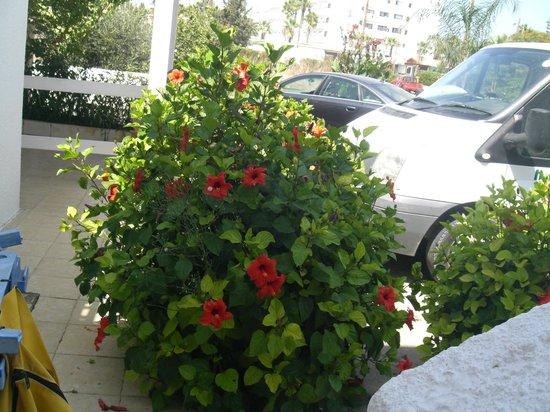 Alexia Hotel  Apartments: parcheggio gratuito davanti a casa