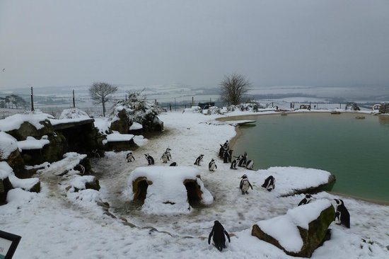 Citaten Winter Zoo : Winter wonderland picture of zsl whipsnade zoo