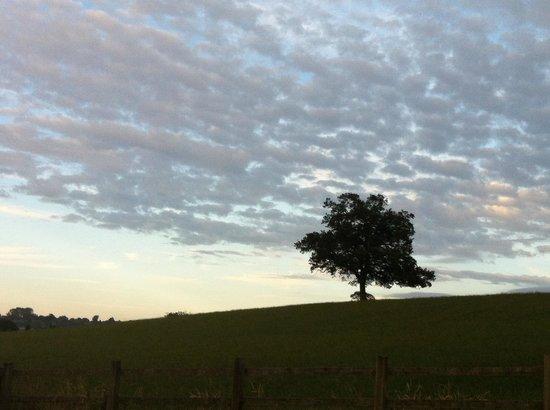 Clanville Manor: The Lone Oak.