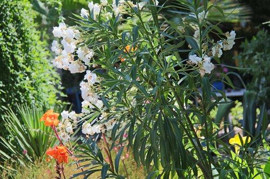 Bakkhos Guesthouse: Le jardin et sa végétation luxuriante