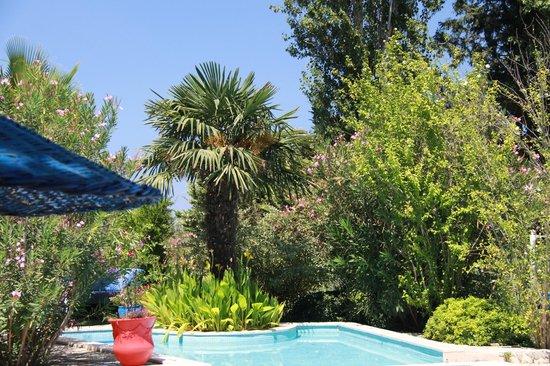 Bakkhos Guesthouse: Le jardin autour de la piscine