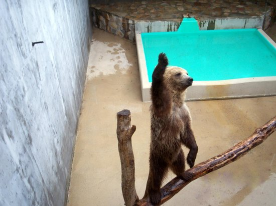 Black Forest Bear Park and Reptile Exhibit: luv u...