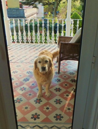Bed and Breakfast Villa Mira Longa: always there to greet you, How delightful ! ! !