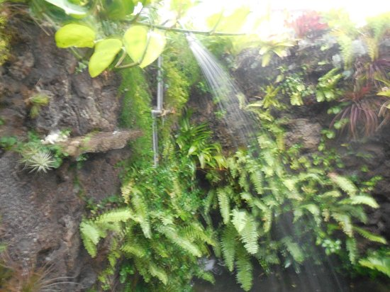 Ka'awa Loa Plantation: Outside shower
