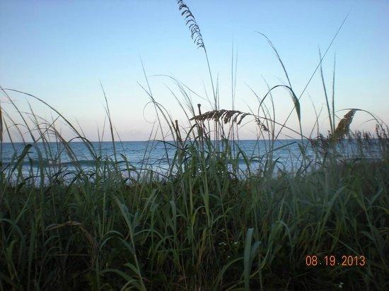 Oceanfront Paradise Resort: sea oats