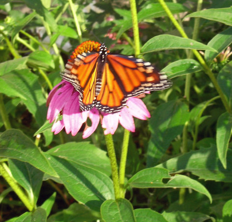 Devonfield Inn: Butterfly Garden