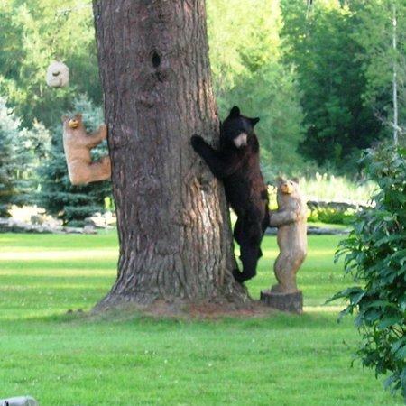 Devonfield Inn: Backyard wildlife