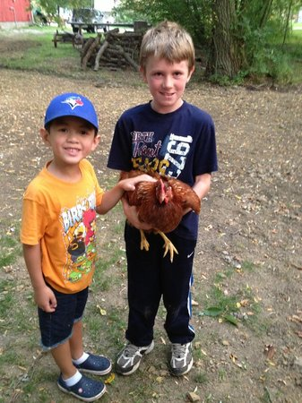 Oakwood Escape: Friendly Chickens