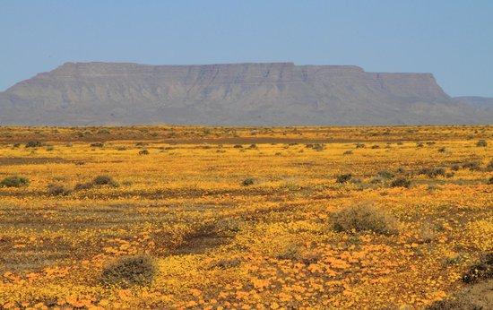 Tankwa Karoo National Park: Wild flowers