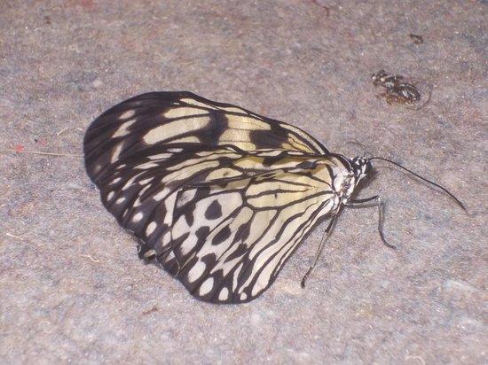 butterfly farm dabruzzo region - photo#16