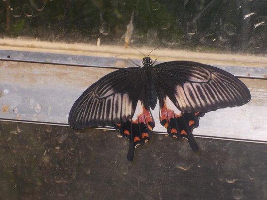 butterfly farm dabruzzo region - photo#13