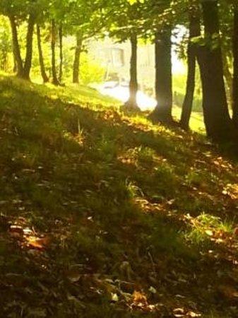 Hotel Federico II: scorcio passeggiando per il bosco