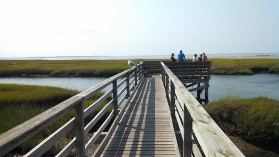 Gray's Beach : wooden walkway through the grass and water