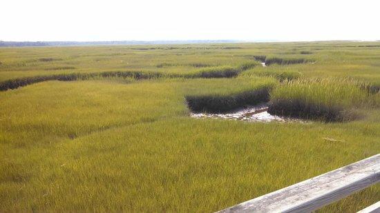 Gray's Beach : from the walkway
