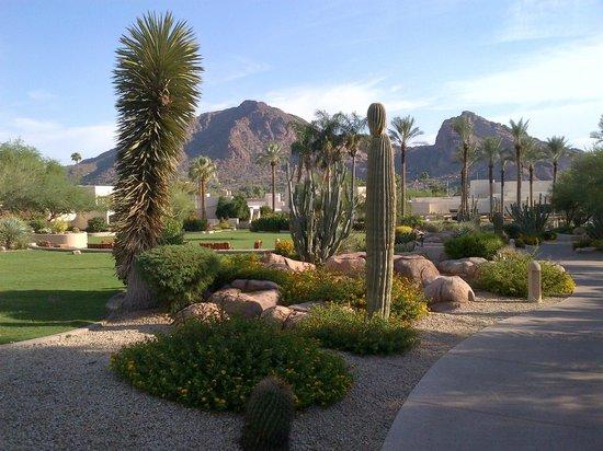 Scottsdale Camelback Resort: Garden area