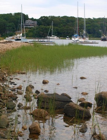 Cornelia Carey Sanctuary (The Knob): Further round the bay at Quissett Harbour