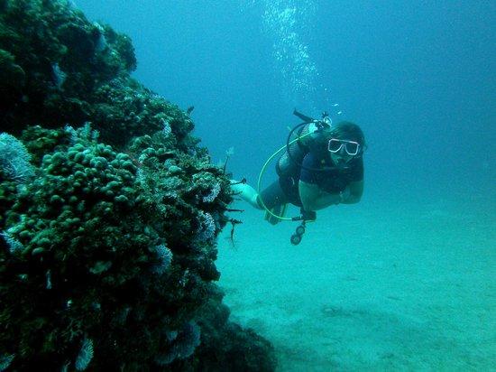 Turtle Dive Center: Dolfin Shipwreck