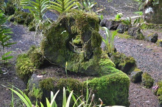 Hale Moana Bed & Breakfast: The lava tree mold that greets you.