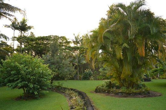 Hale Moana Bed & Breakfast: Get lost walking in the yard, too easy.