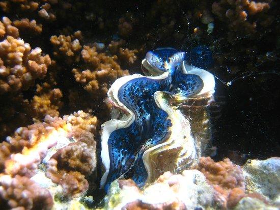 Coral Garden Tahaa