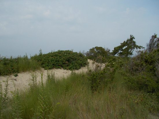 Hammonasset Beach State Park: beach vegetation