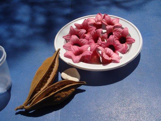Camping Guidaloca: Composizione con semi e fiori di Brachichiton