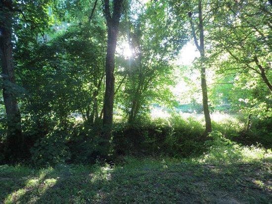 Le Moulin du Mesnil : Garden