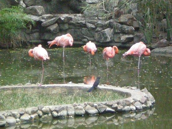 Barquisimeto, Venezuela: Flamingos haciendo siesta