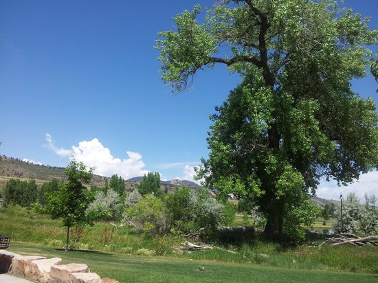 Spring Canyon Community Park : Beautiful green areas