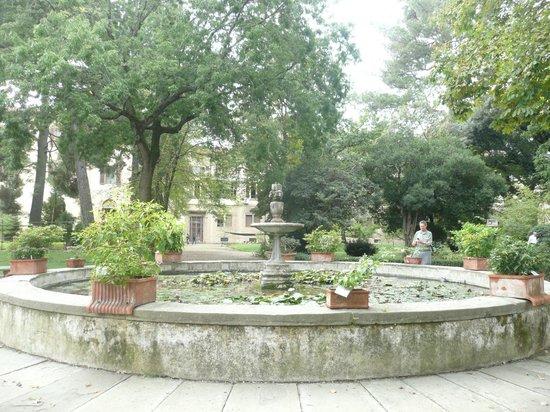 Giardino Dei Semplici Foto Di Orto Botanico Firenze