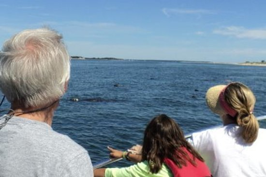Blue Claw Boat Tours: more seals