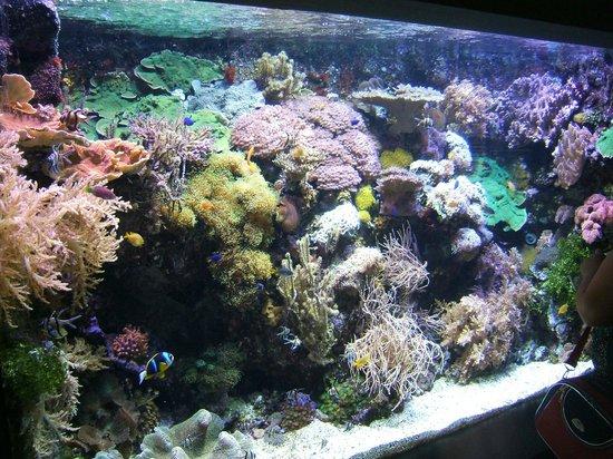 Foto di acquario di genova genova tripadvisor for Blu di metilene acquario