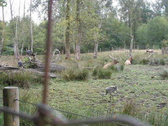 Greater Vancouver Zoo: Elk, sandhill crane and wild turkeys