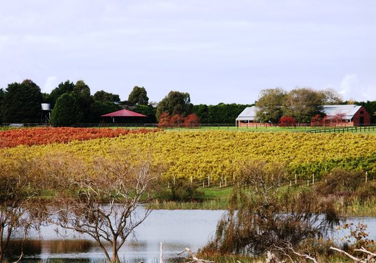 Box Stallion Winery: The Vineyard
