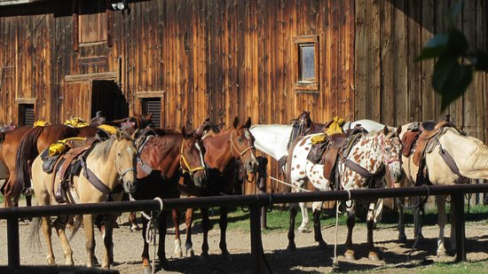 Vee Bar Guest Ranch: Horses!!!