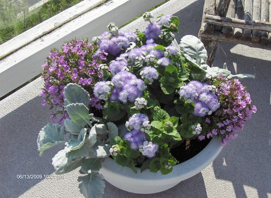 Beach House Salt Spring : Pinks and mauves are the colour theme fro this pot!