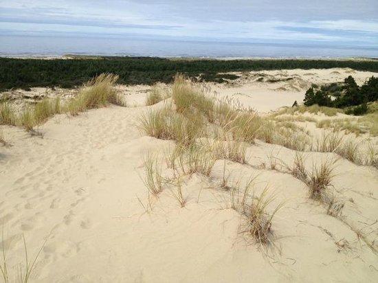 "John Dellenback Dunes Trail : Dines ""footprint"" Trail"