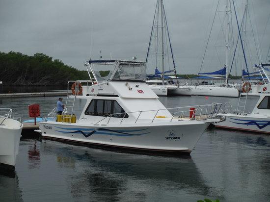 Centre de plongee, Marina Gaviota a Cayo Santa Maria : Les deux bateaux de plongée sont neufs et très confortables