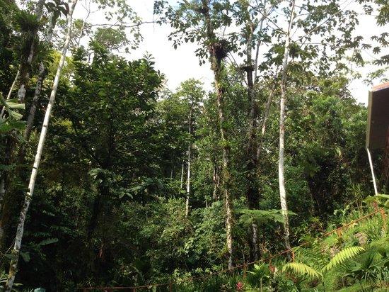 Agua Inn: in the trees