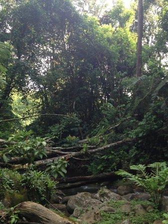 Agua Inn: river wraps around the property