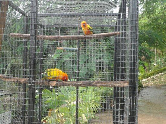 Animal Farm: parrots