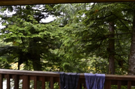Reef Point Cottages : View from deck (i.e. none)