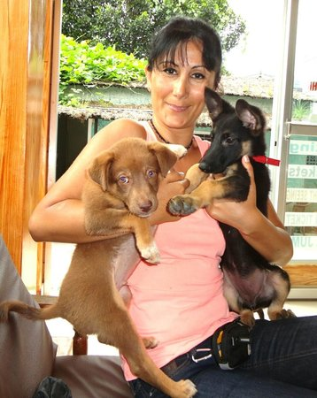 Himalayan Star Hotel: two cute puppies