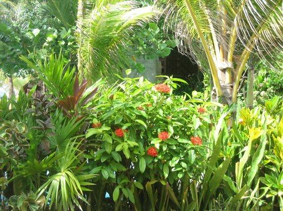 Ramon's Village Resort: grounds
